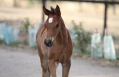 img_3044-bints-filly