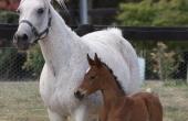 s-foal-2013