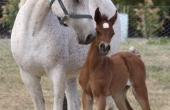 s-foal-2013_0